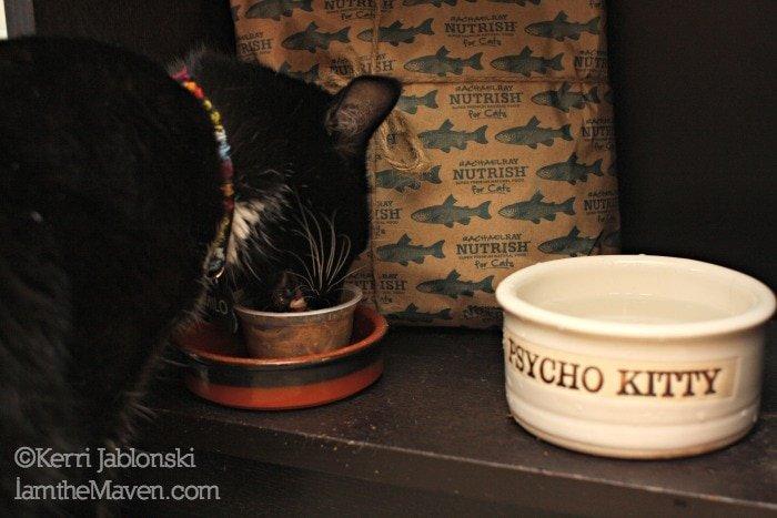 Cat eating #NutrishforCats #Sponsored #MC