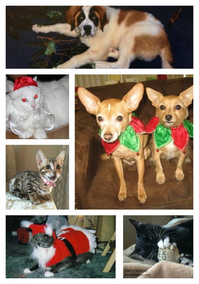 The Maven's Pets and Friends #PurinaHolidayWM #Ad